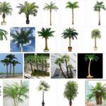 Artificial Palm Trees - Big sale ! 2021