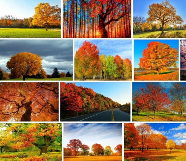 Autumn Trees - Images & Pictures **2021