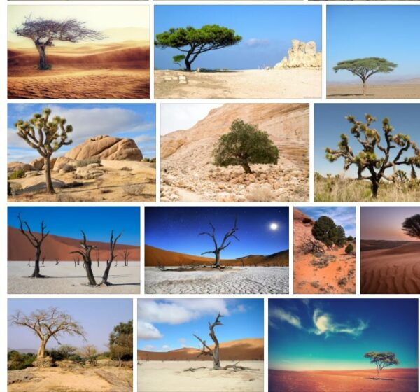 Desert Trees - The Best Desert Trees with Pictures and Names