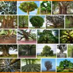 Tobi lutke 1.000.001 trees, Important  Information ***2021