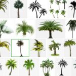 Palm Trees PNG, 800+ Premium Free Transparent  images, download free pictures