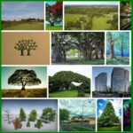 Twin Trees Too, 285 Recommendations - Syracuse