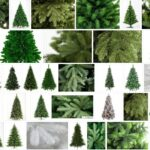 Crystal Trees, What Are Crystal Trees?