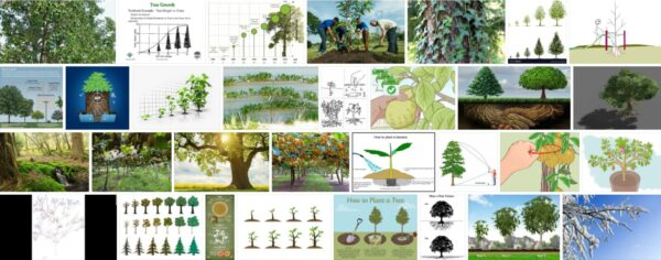 How Do Trees Grow, Simple Tips That Will Help You Decorate Your Garden