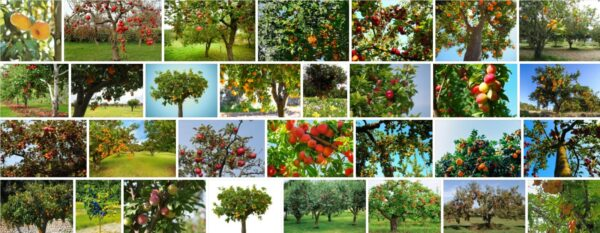 Lowes Fruit Trees, What is the best month to plant fruit trees?