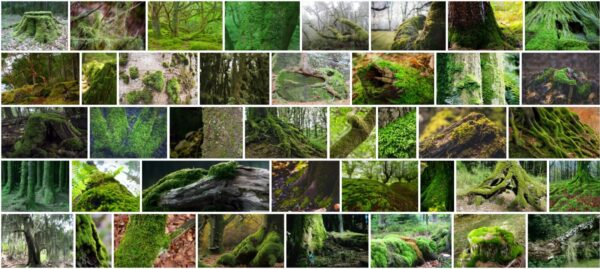 Moss On Trees, Should Moss be removed from trees?