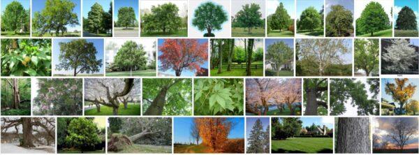 Ohio Trees, What kind of trees grow in Ohio?
