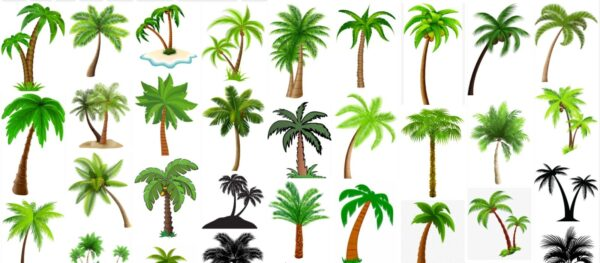 Palm Trees Clipart, Free 210 Clip Art Collection of Palm Tree