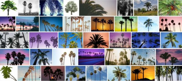 Are Palm Trees Native To Florida