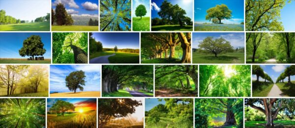 Summer Trees, Best 108 Pictures and Pre Lit