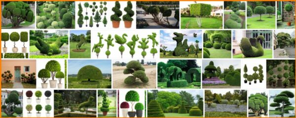 Topiary Trees, What Trees are Used For Topiary?