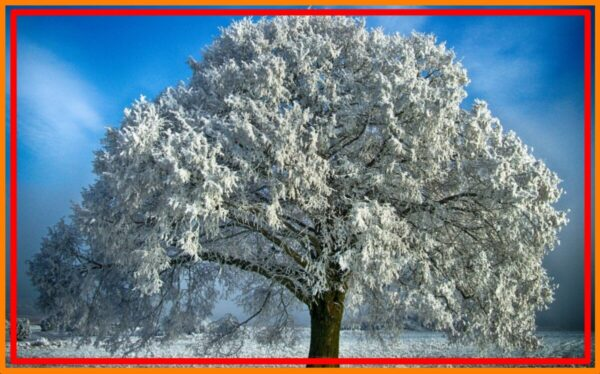Trees In Winter, What happens to the trees in winter ? **2021
