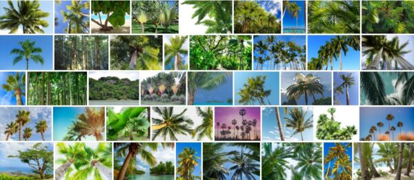 Tropical Trees, 93 Best Tropical Tree Types, Names and Pictures !!!