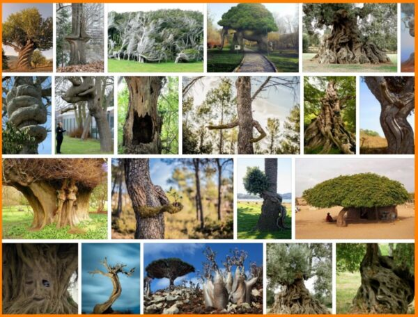 Weird Trees, 108 HD Images & Picture 2021